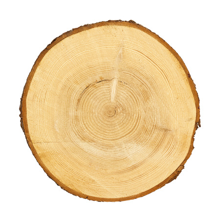 Photo pour tree trunk cross section, isolated on white, clipping path included - image libre de droit