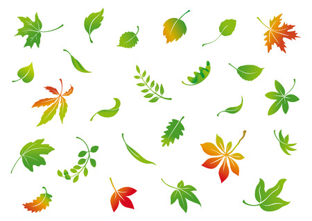 Illustration for set of vector autumn leaves - Royalty Free Image