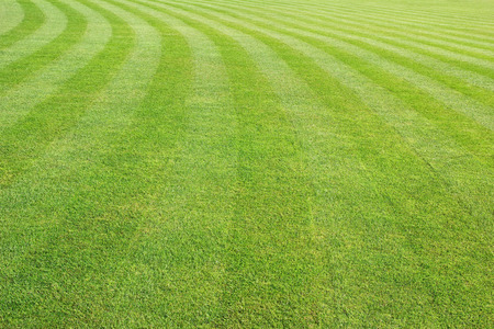 Photo for mowed lawn background - Royalty Free Image