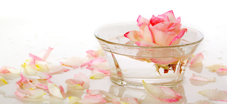 Photo pour Infused water with rose petals in a reflection White Rose in a bowl of water and  petals. - image libre de droit