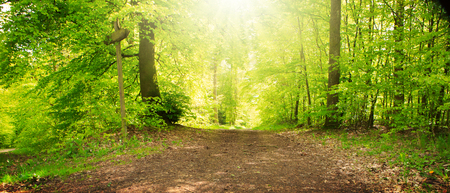 Photo for Sunlight in the green spring forest in germany. - Royalty Free Image