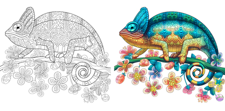 Illustration for Coloring page of chameleon lizard. Colorless and color samples for book cover. Freehand sketch drawing for adult antistress colouring with doodle and zentangle elements. - Royalty Free Image