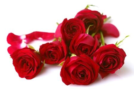 Photo for Image of roses on white background. - Royalty Free Image