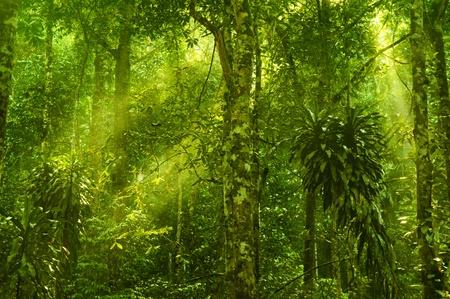 Photo pour Sun shining into tropical forest - image libre de droit