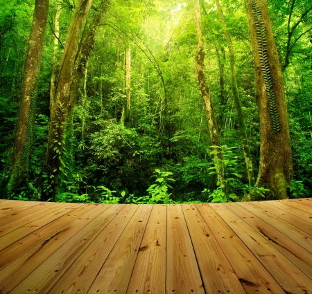 Photo pour Wooden floor and Tropical Rainforest Landscape, Malaysia, Asia - image libre de droit