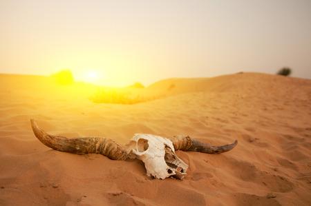 Foto de Animal skull in the desert - Imagen libre de derechos