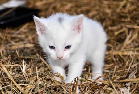 Photo pour small white cat - image libre de droit
