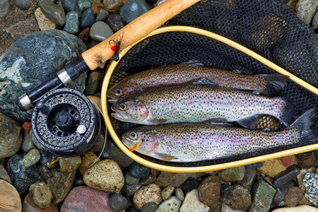 Foto de Top view of wild trout, inside of landing net, with fishing fly reel, pole and assorted flies on wet river bed stones - Imagen libre de derechos