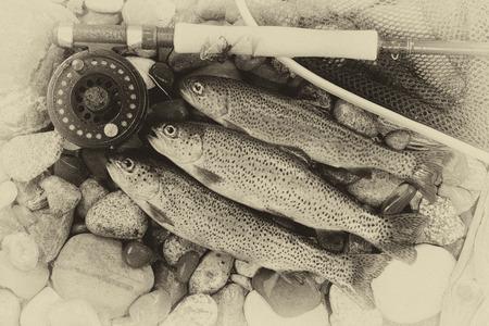 Foto de Three wild trout with fishing fly reel, landing net and assorted flies on wet river bed stones with vintage concept. - Imagen libre de derechos