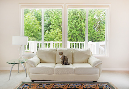 Photo pour Family cat sitting on white leather couch and large windows showing bright green trees in background. - image libre de droit