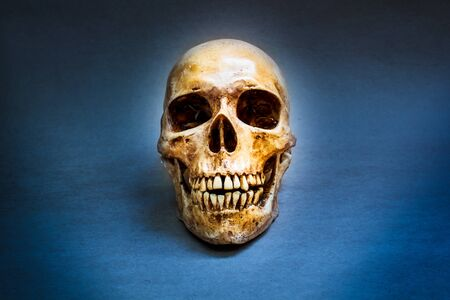 Still life with a human skull concept on the art.