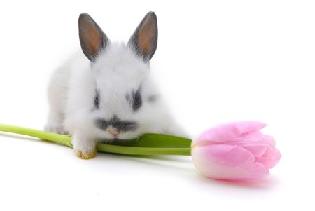 small rabbit with flower isolated on white background