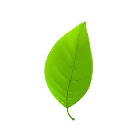 Ilustración de Green leaf - Imagen libre de derechos