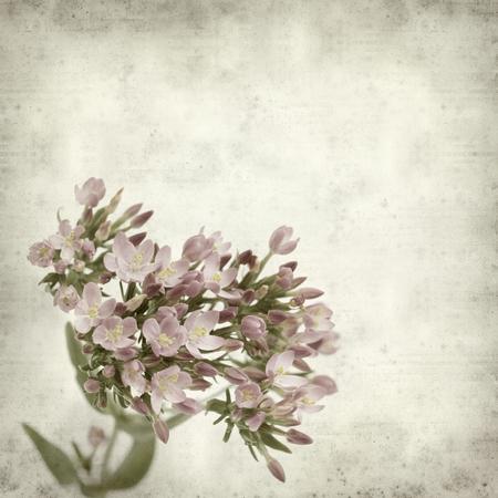 Photo pour textured old paper background with pink flowers - image libre de droit