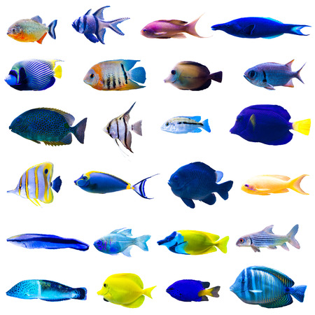 Foto de Tropical fish collection isolated on white background - Imagen libre de derechos