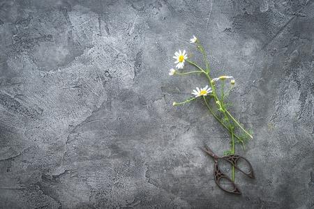Photo pour Cut chamomile flower on gray surface, copspace, topview - image libre de droit