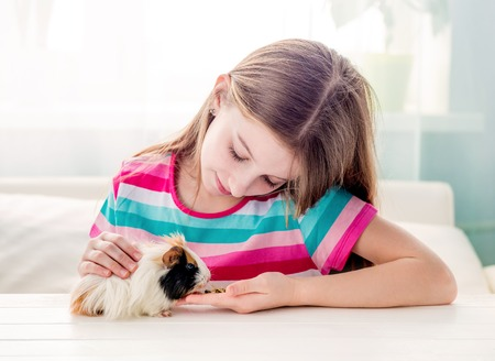 Photo for Girl stroking fluffy guinea pig - Royalty Free Image