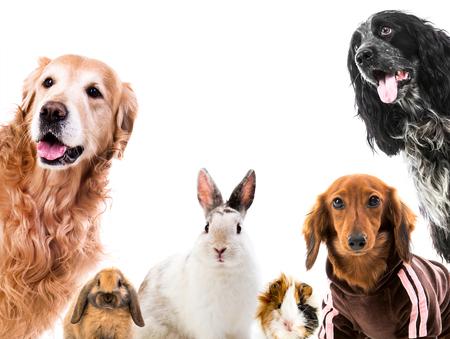 Photo pour Group of cute fluffy animals - image libre de droit