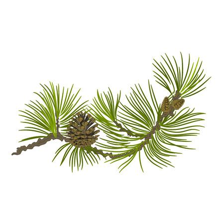 Illustration pour Branch of Christmas tree Pine branch whit pinecones vector illustration - image libre de droit