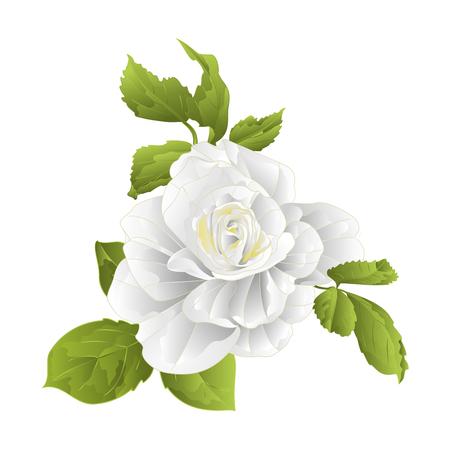 Ilustración de Stem of a white rose and leaves on a white background - Imagen libre de derechos