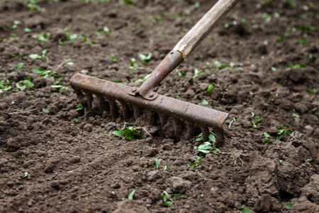 Foto de On the soil lie the garden rake. Close-up, Concept of gardening. - Imagen libre de derechos