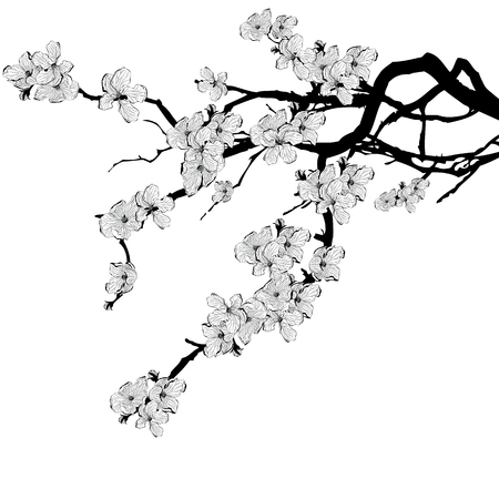 vector illustration of branch of cherry tree in black and white colors
