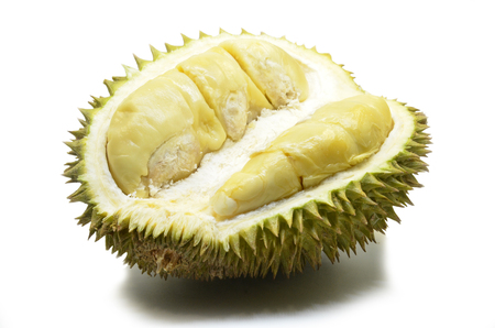 Photo pour Durian fruit isolated on white background.The durian is distinctive for its large size strong odour and formidable thorn-covered rind. - image libre de droit