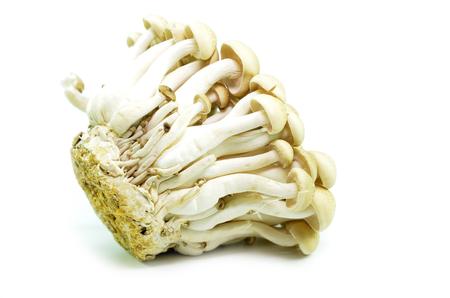 Photo for Fresh beech mushroom or Buna shimeji isolated on white background - Royalty Free Image