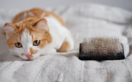 Foto de lying cute cat and a comb full of pet fur - Imagen libre de derechos