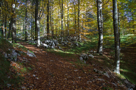 Photo for Dirt Forest Path in autumn colors with falling foliage - Royalty Free Image