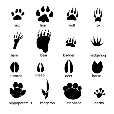 Ilustración de graphic set of animal footprints on a white background - Imagen libre de derechos