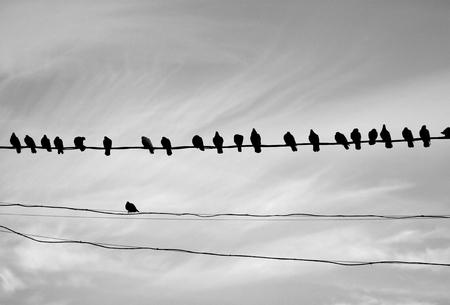 Foto de Photo of a close-up of many silhouettes of birds on wires on a light background - Imagen libre de derechos