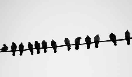 Foto de Photo of a close-up of many silhouettes of birds - Imagen libre de derechos