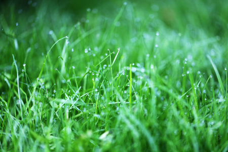 Photo for Photo of a bright green grass with dew drops in the early morning in the park - Royalty Free Image
