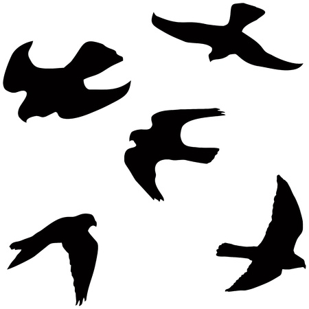 Flying falcon, set of the black vector silhouettes
