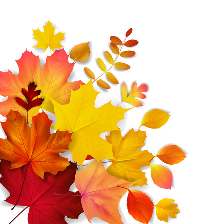 Illustration pour Isolated yellow, orange, red autumn leaves, vector illustration - image libre de droit