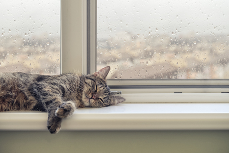 Photo for Cute cat sleeping on the windowsill in a rainy day - Royalty Free Image