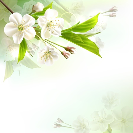Blossoming tree branch with white flowers on bokeh green background  Vector illustration