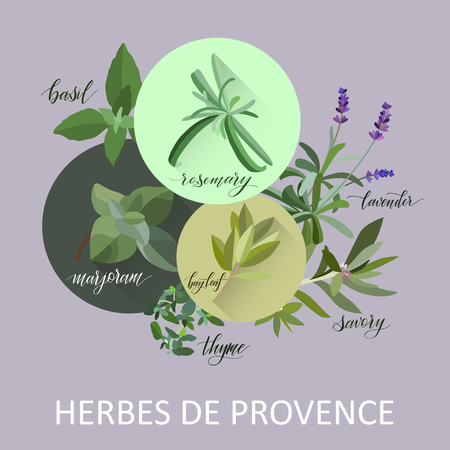 Illustration pour Herbs de provence. Hand written names. Aromatic cooking herbs - image libre de droit