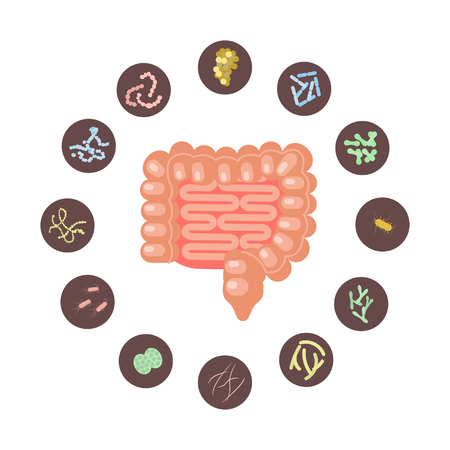 Illustrazione per Infographic of Intestines with microbiota in flat design. Vector illustration - Immagini Royalty Free