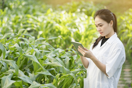 Foto de Biotechnology woman engineer examining plant leaf for disease - Imagen libre de derechos