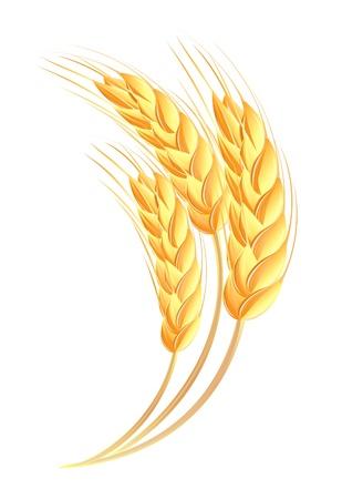 Wheat ears icon