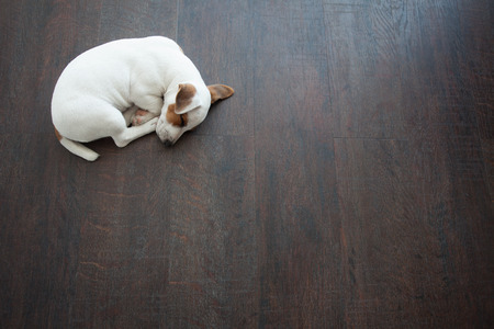 Foto de Puppy sleeping at warm floor. Dog - Imagen libre de derechos