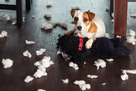 Photo pour Pampering dogs. Naughty puppy. mischief - image libre de droit