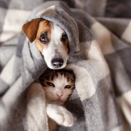 Photo for Dog and cat under a plaid. Pet warms under a blanket in cold autumn weather - Royalty Free Image