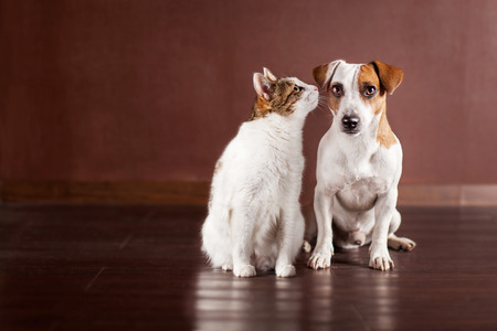 Foto de Dog and cat at home. Friendship pets - Imagen libre de derechos