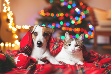 Photo for Cat and dog under a christmas tree. Pets under plaid - Royalty Free Image