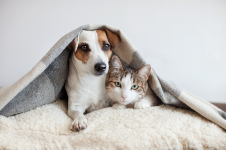 Foto de Dog and cat together. Dog hugs a cat under the rug at home. Friendship of pets - Imagen libre de derechos