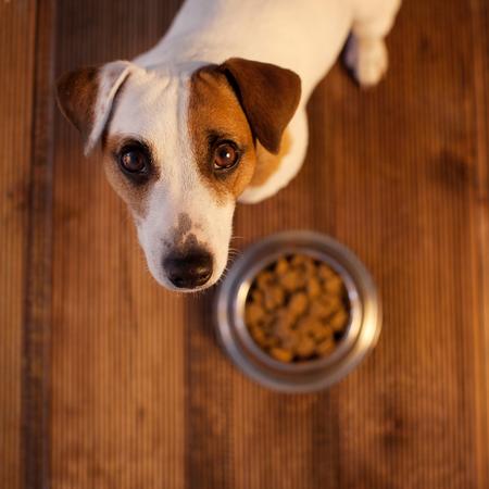 Foto de Pet eating food - Imagen libre de derechos