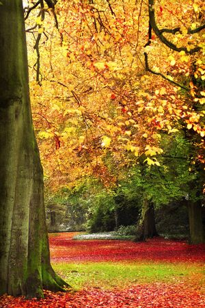 Autumn scene with treetrunk and fall